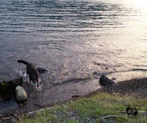 Shale beach cultus lake